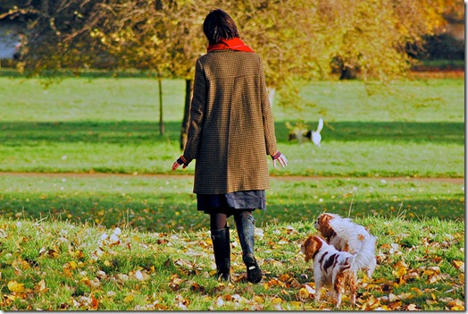 Pour que promener son chien reste un plaisir
