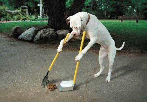 Guide de propreté pour chien