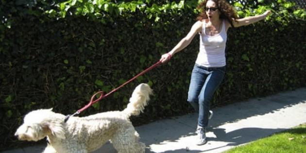 Votre chien tire sur la laisse... Voici la solution !