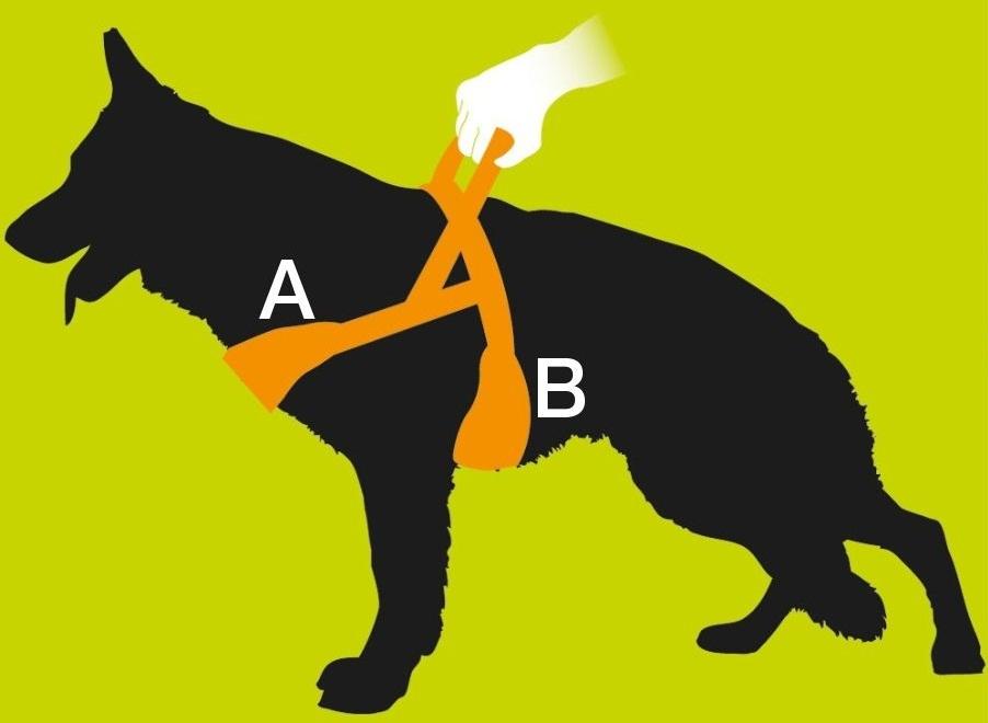 Comment choisir un harnais pour chien