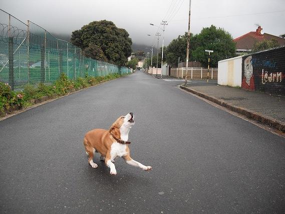 Télécharger Maîtrisez les aboiements de votre chien Par Frank Berthelot Pdf Gratuit
