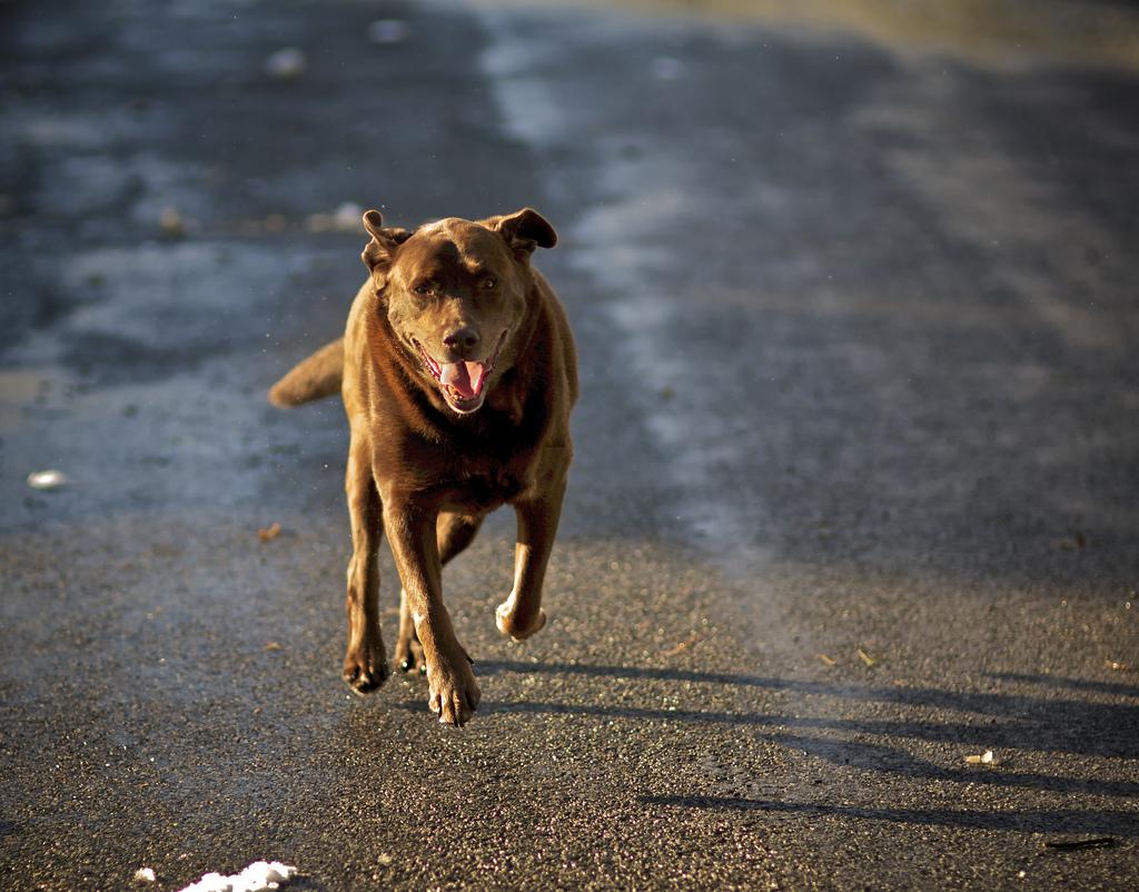 Dresser un chien sans laisse